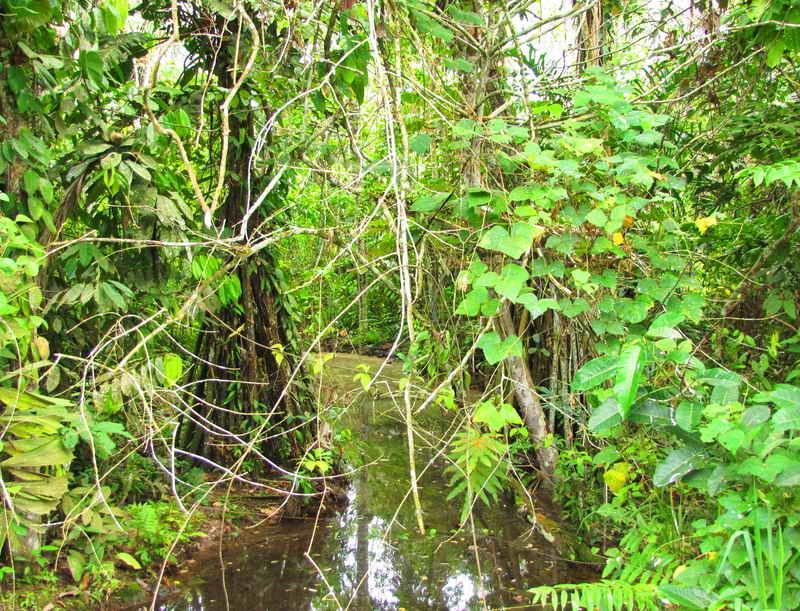 Джунгли Амазонки - Икитос