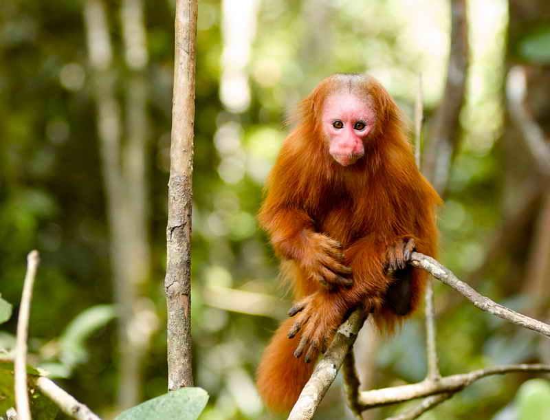 Остров Обезьян - Икитос - Амазонка